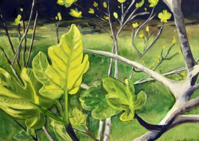 Spring Fig